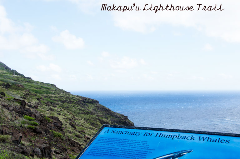 Makapuu-Point-Lighthouse-Trail18