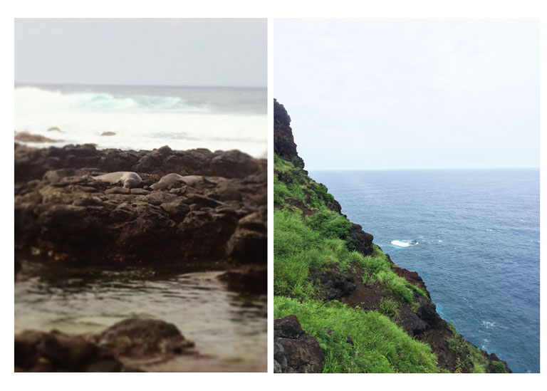 Left: Monk Seals on Kaena Point Trail. Right: Whales off of the Makapuu Lighthouse Trail