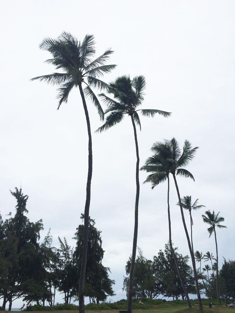 hurricana-ana-oahu