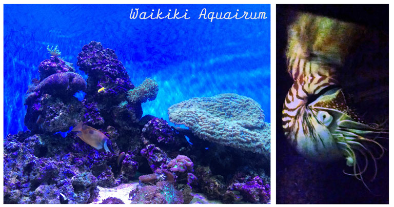 things to do when it rains on oahu - waikiki-aquairum