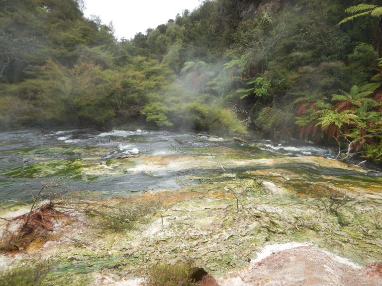 Waimangu - Rotorua-8