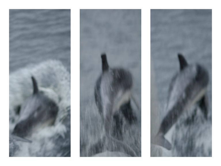 Doubtful Sound-Dolphins-1