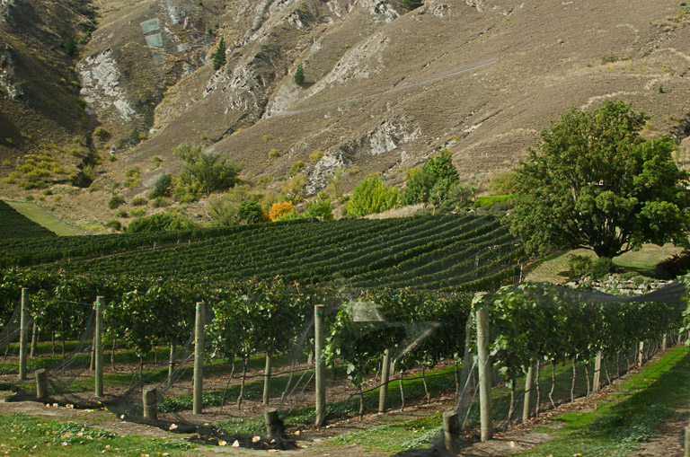 Otago Wine Tour (3 of 29)