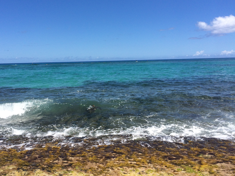 the best place to see hawaiian green sea turtles on oahu-1