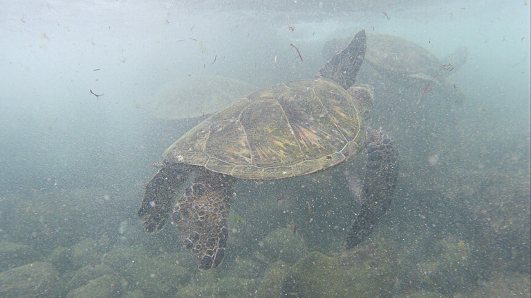 the best place to see turtles on oahu (2 of 63)