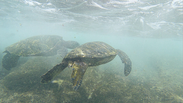 the best place to see turtles on oahu (3 of 63)