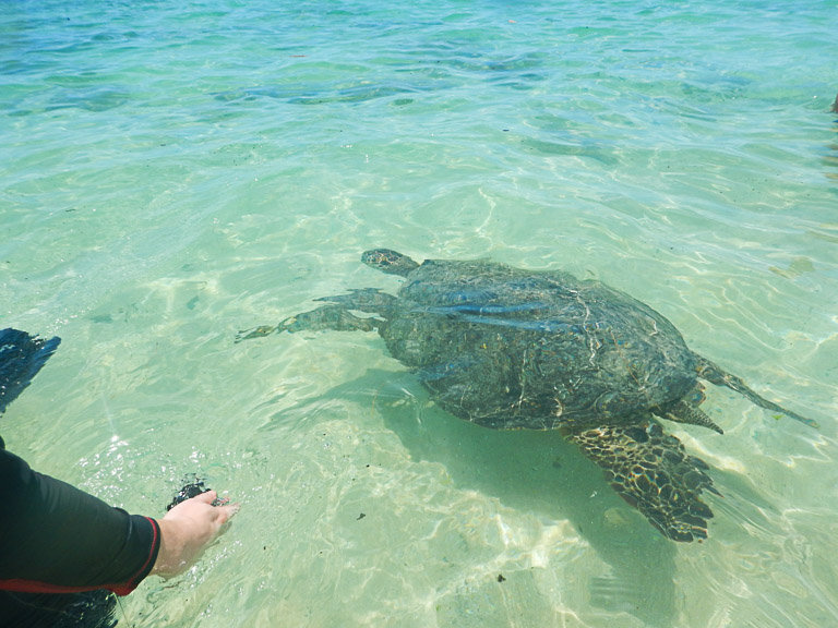 the best place to see turtles on oahu (50 of 63)-2