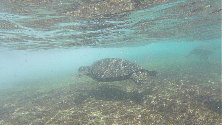 the best place to see turtles on oahu (6 of 63)